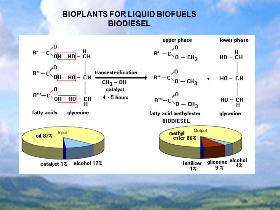 BIOPLANTS FOR LIQUID BIOFUELS