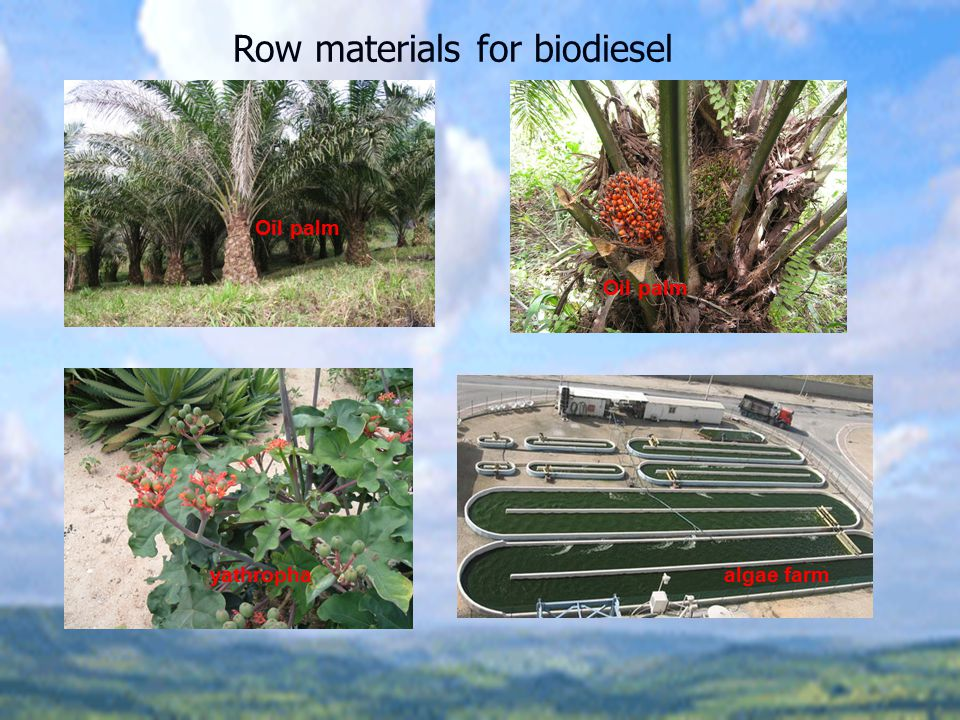 Row materials for biodiesel
