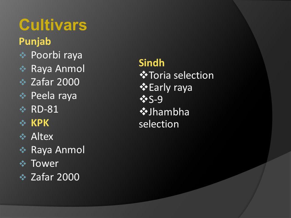 Cultivars Punjab Poorbi raya Raya Anmol Zafar 2000 Peela raya Sindh