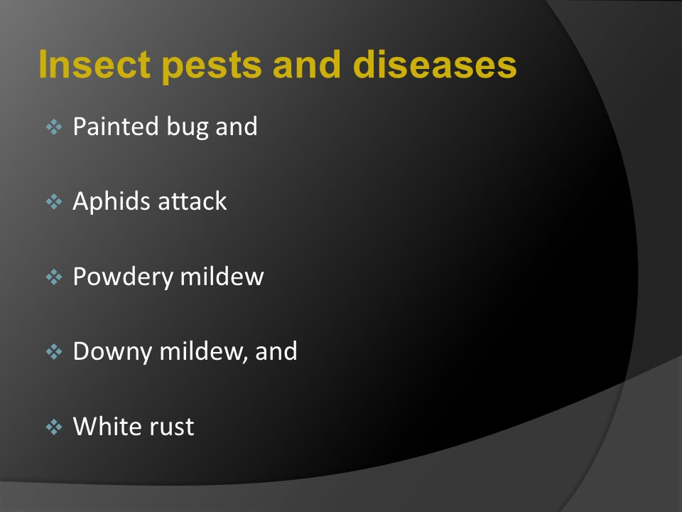Insect pests and diseases