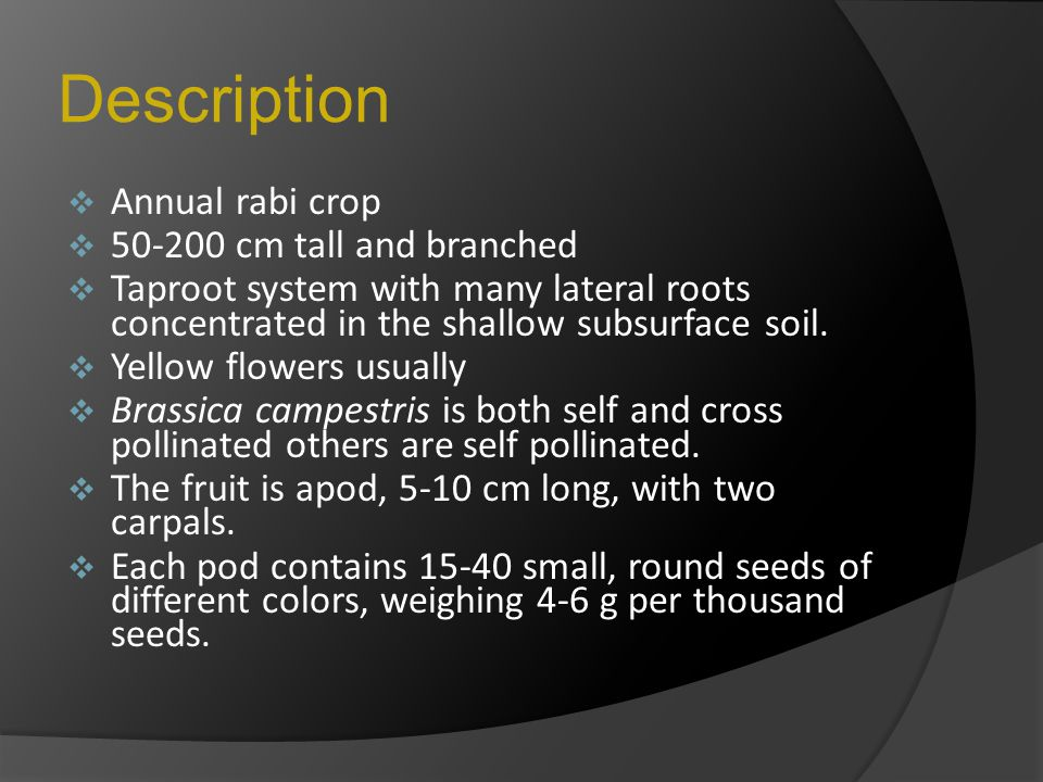 Description Annual rabi crop 50-200 cm tall and branched