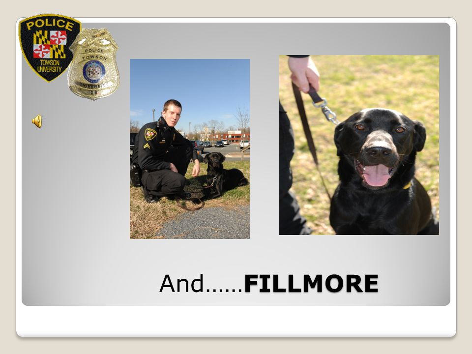 Narcotics Sniffer VERY FRIENDLY And……FILLMORE