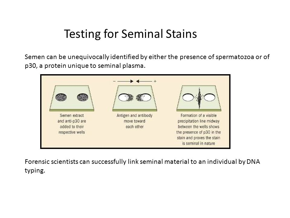 Testing for Seminal Stains