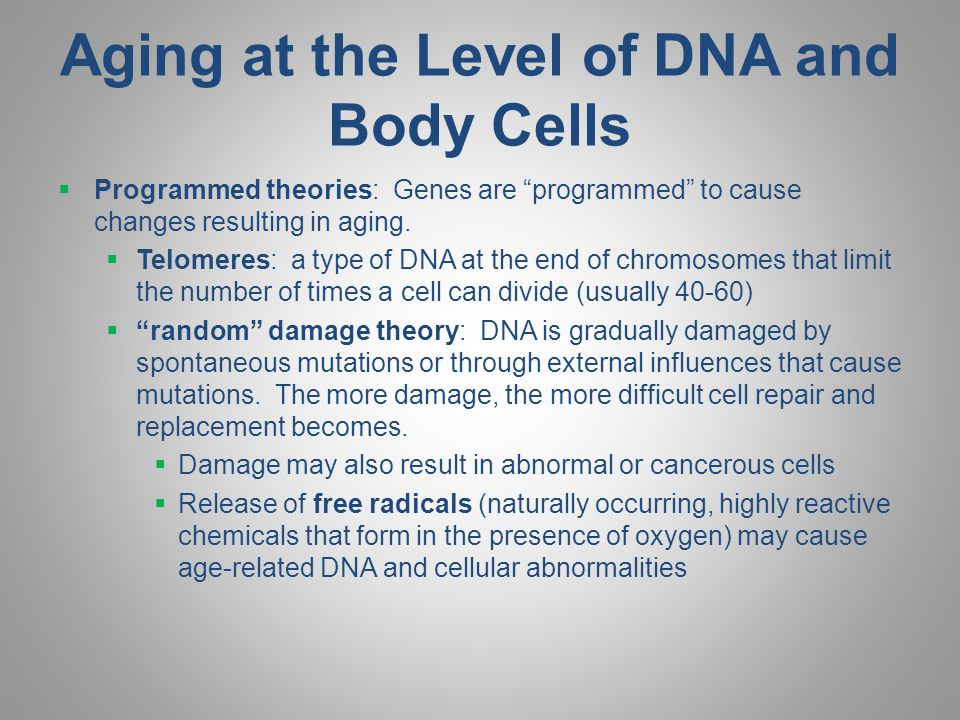Aging at the Level of DNA and Body Cells
