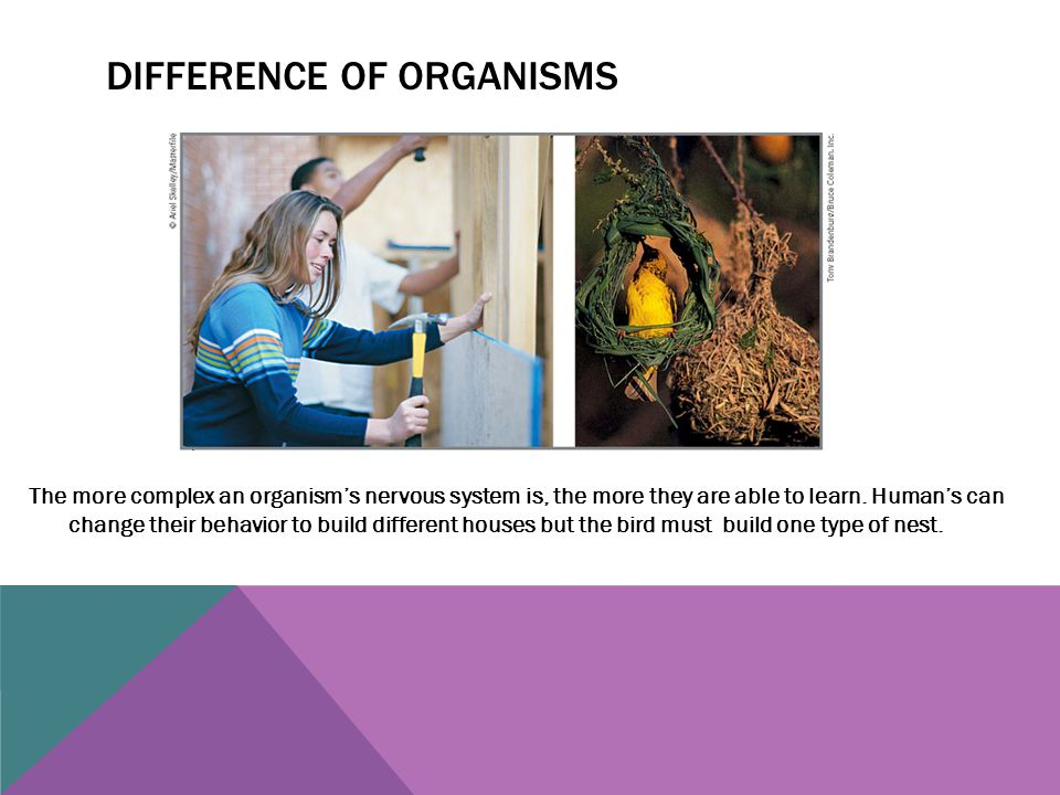 Difference of organisms
