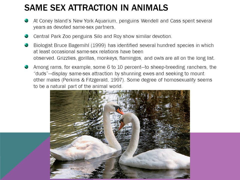 Same sex attraction in animals