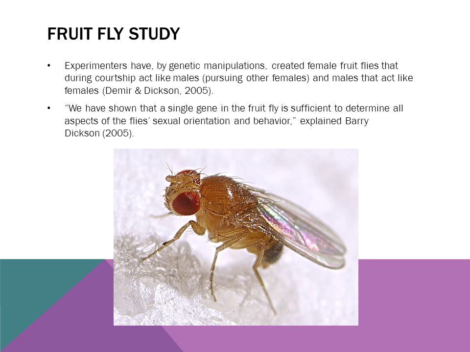 Fruit fly study