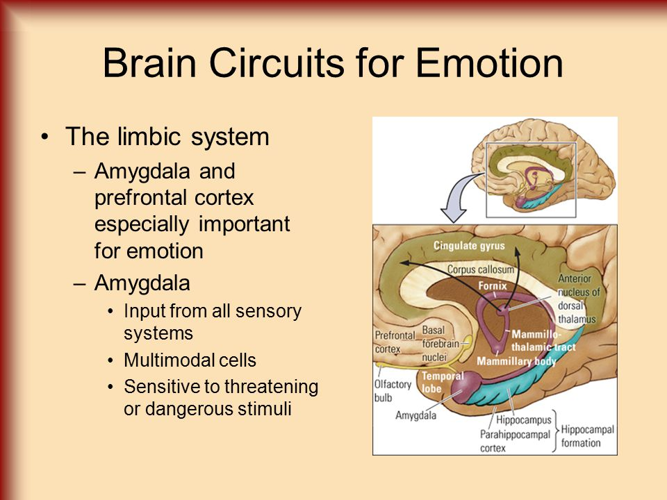 Brain Circuits for Emotion