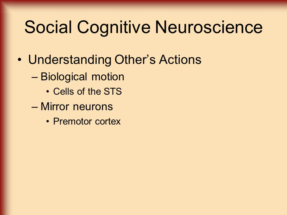 Human neuropsychology ppt video online download for Mirror neurons provide a biological basis for