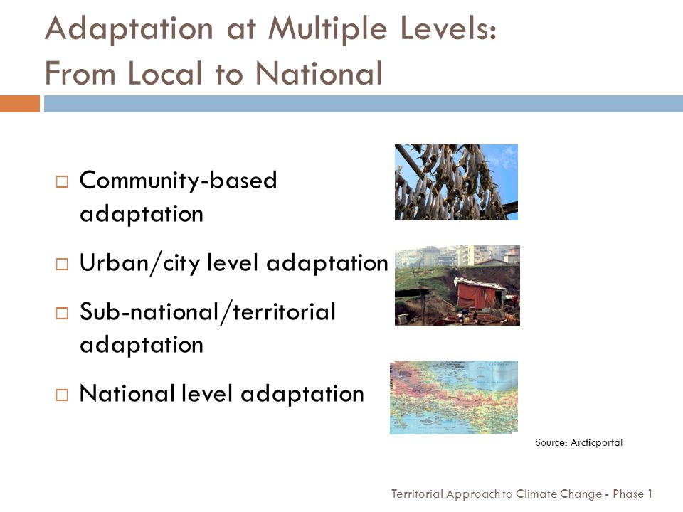 Adaptation at Multiple Levels: From Local to National
