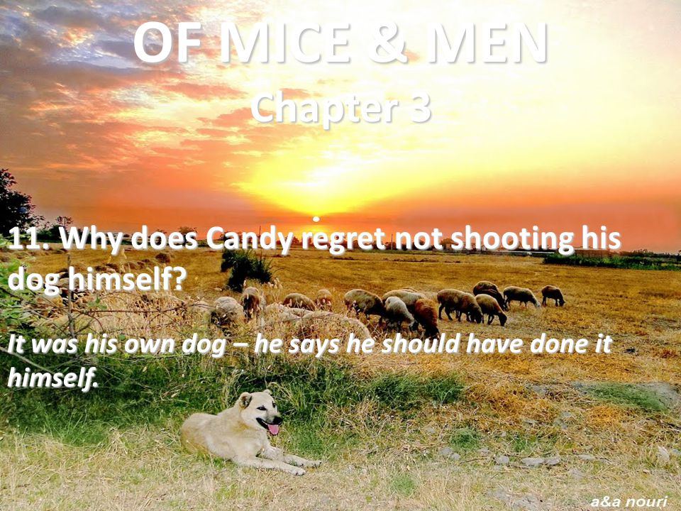 OF MICE & MEN Chapter 3 11. Why does Candy regret not shooting his dog himself.