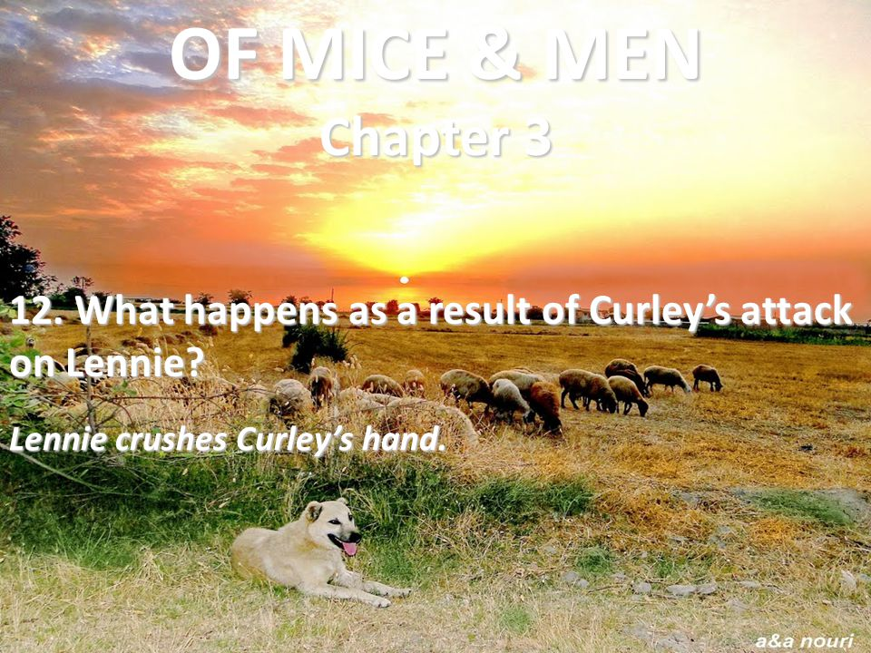 OF MICE & MEN Chapter 3 12. What happens as a result of Curley's attack on Lennie.
