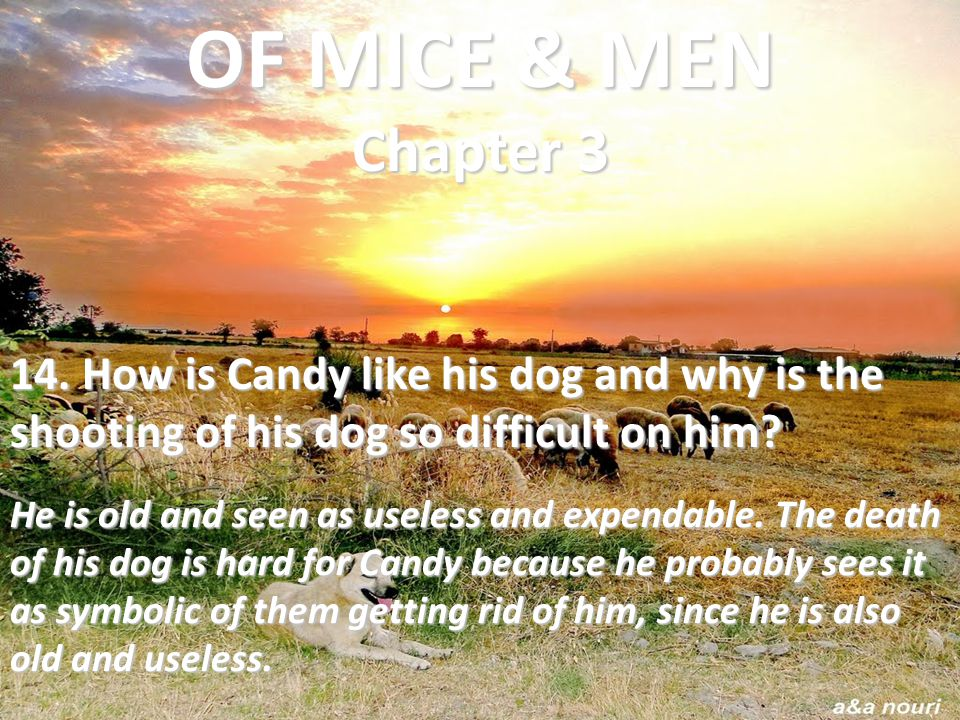 OF MICE & MEN Chapter 3 14. How is Candy like his dog and why is the shooting of his dog so difficult on him