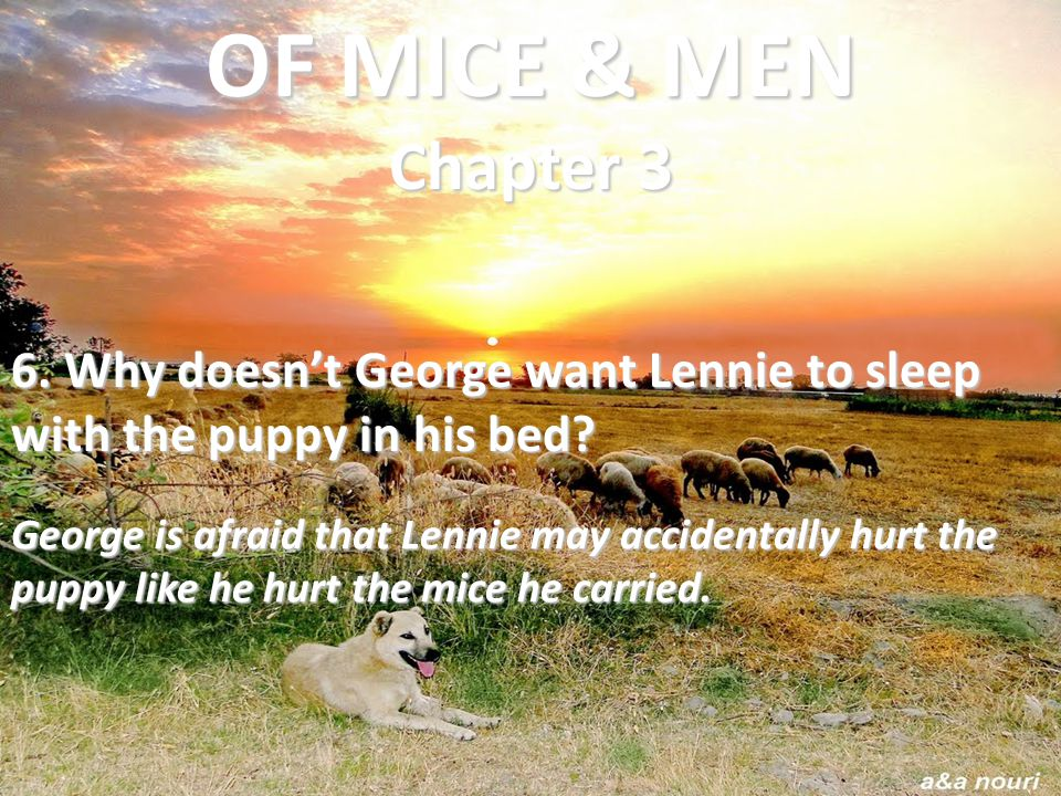 OF MICE & MEN Chapter 3 6. Why doesn't George want Lennie to sleep with the puppy in his bed
