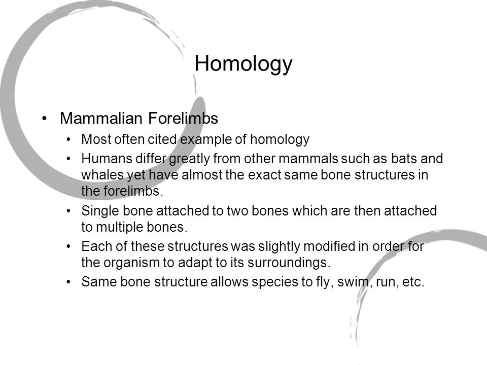 Homology Mammalian Forelimbs Most often cited example of homology