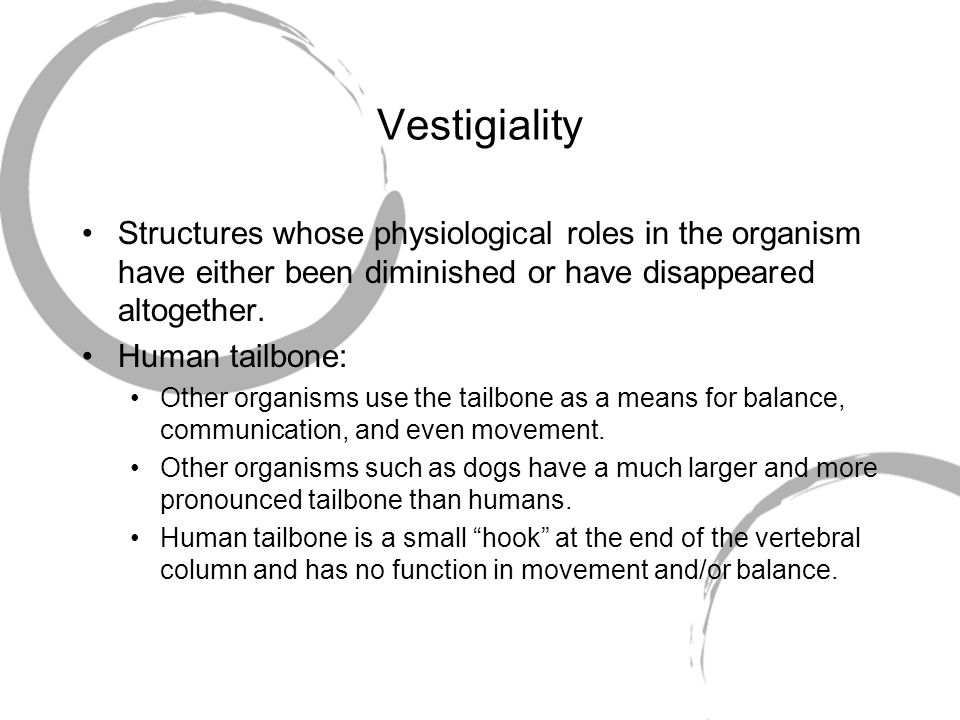 Vestigiality Structures whose physiological roles in the organism have either been diminished or have disappeared altogether.