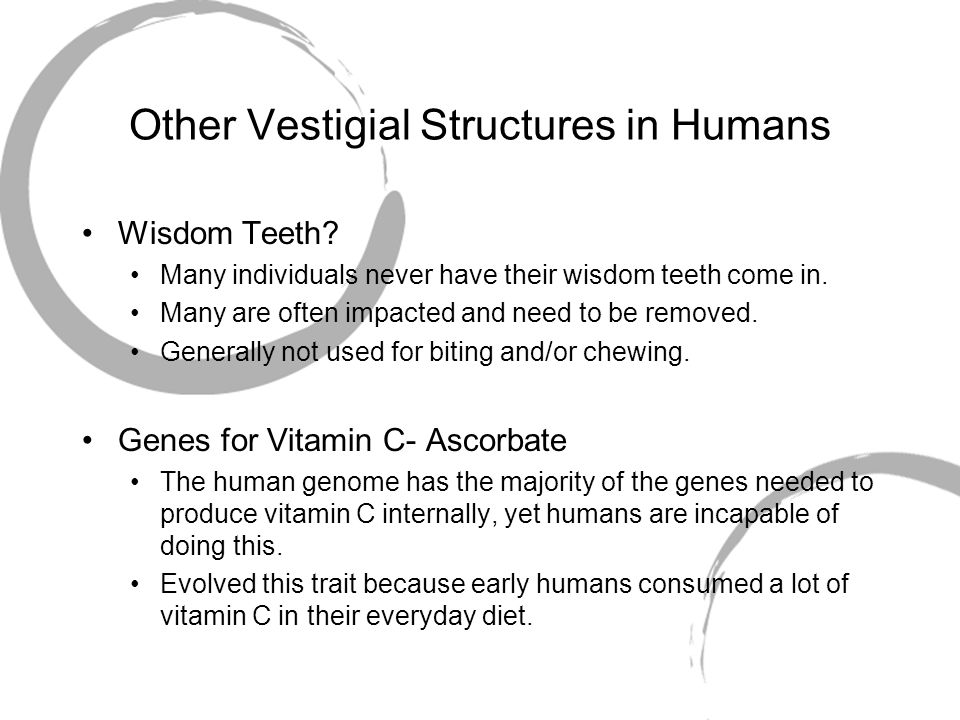 Other Vestigial Structures in Humans