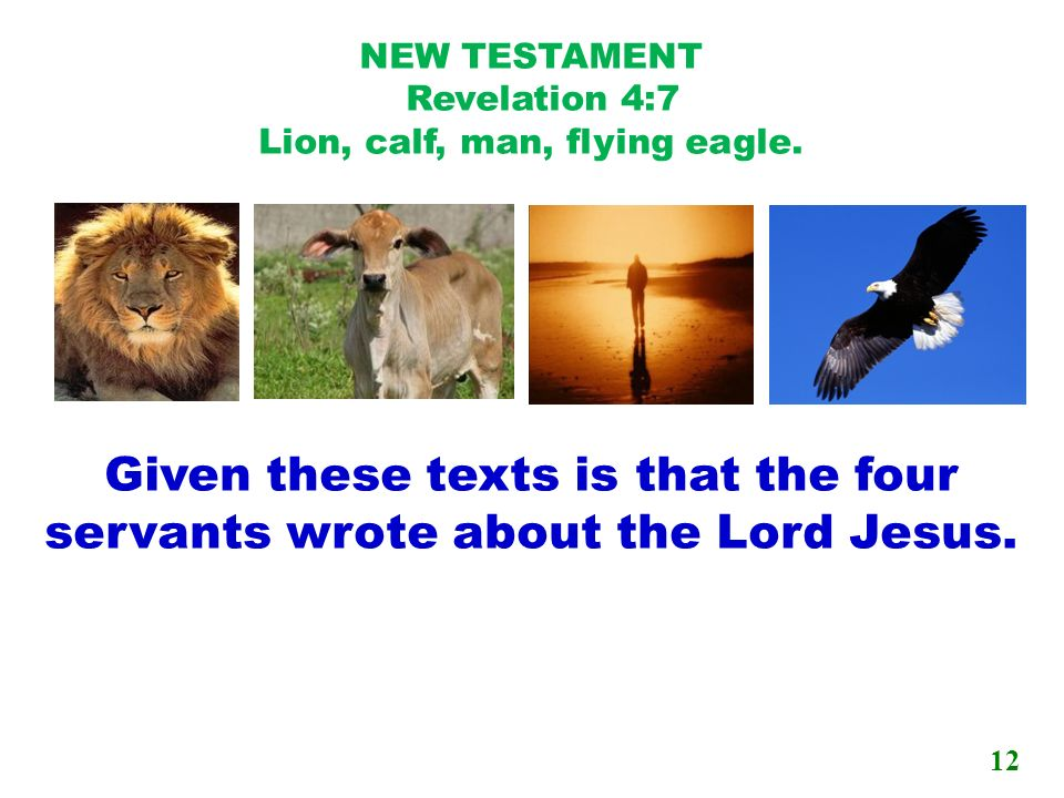NEW TESTAMENT Revelation 4:7 Lion, calf, man, flying eagle.