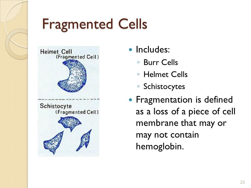 Fragmented Cells Includes: