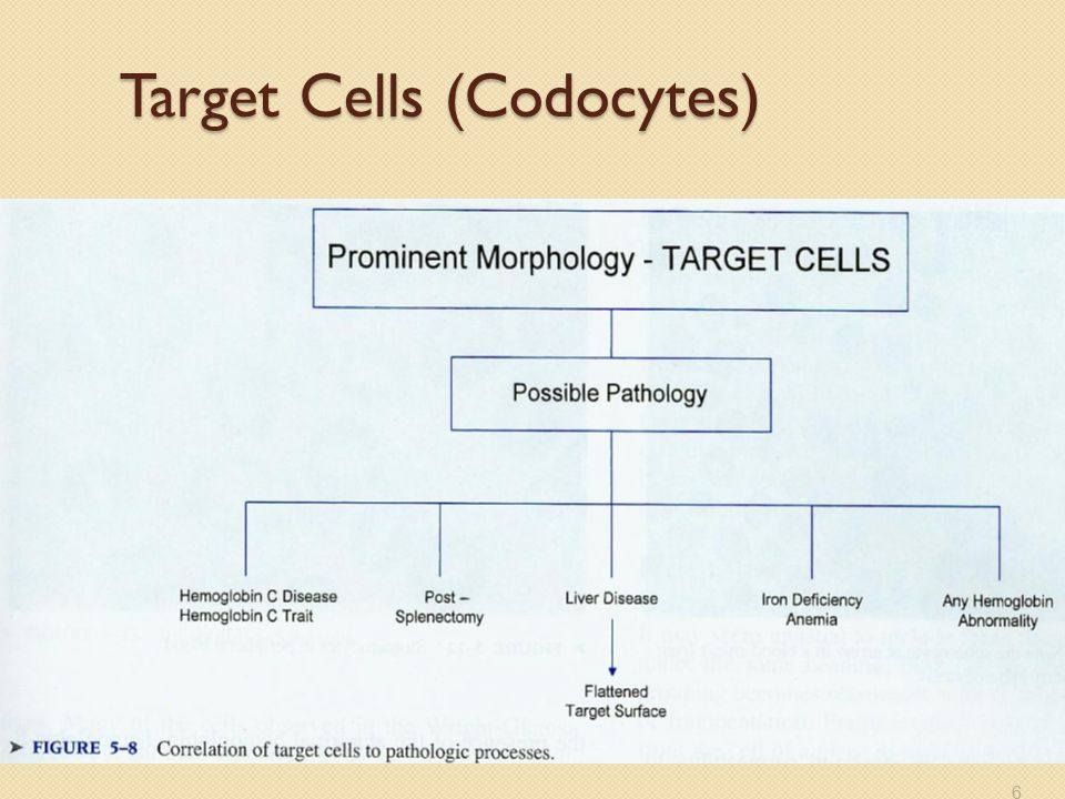 Target Cells (Codocytes)