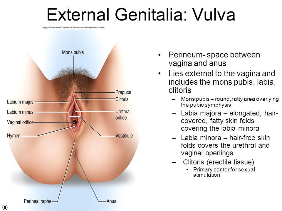 External Genitalia: Vulva