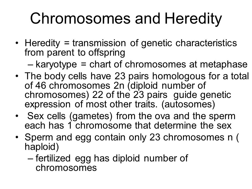 Chromosomes and Heredity