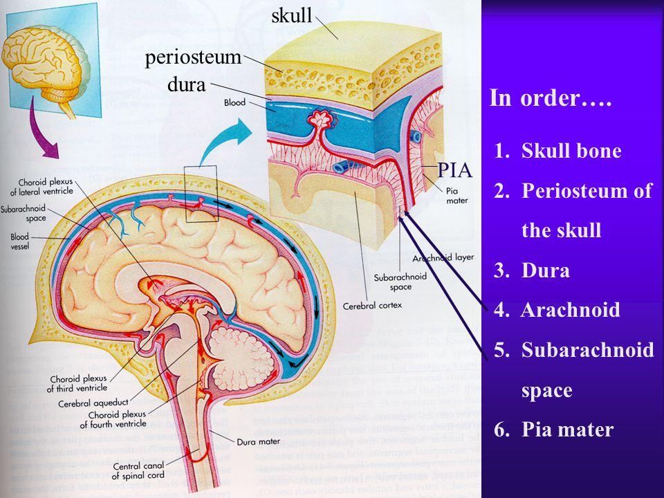 In order…. skull periosteum dura 1. Skull bone 2. Periosteum of PIA