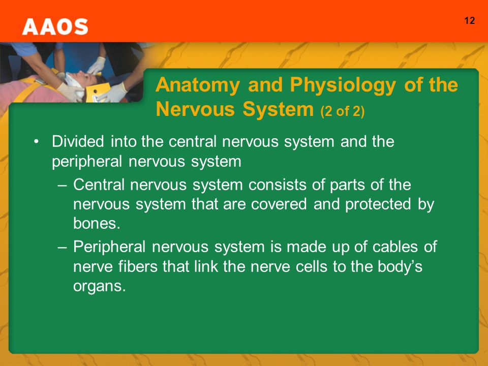 Anatomy and Physiology of the Nervous System (2 of 2)