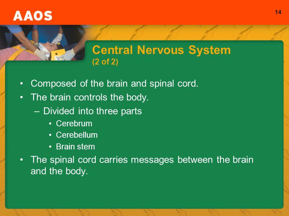 Central Nervous System (2 of 2)