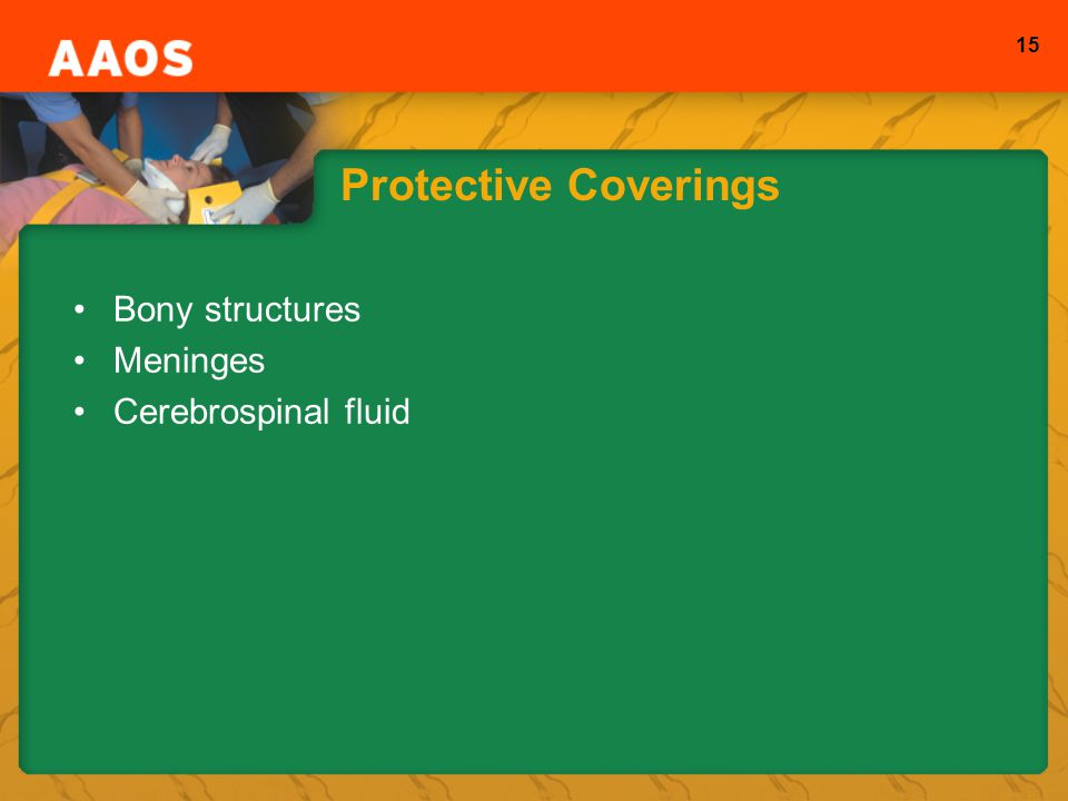 Protective Coverings Bony structures Meninges Cerebrospinal fluid