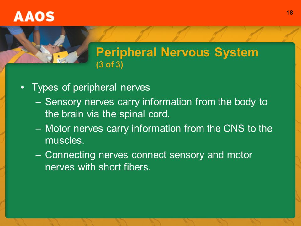 Peripheral Nervous System (3 of 3)