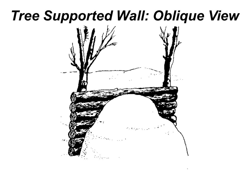 Tree Supported Wall: Oblique View