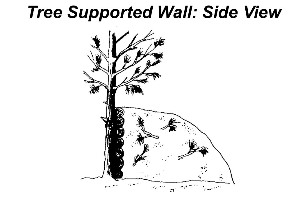 Tree Supported Wall: Side View