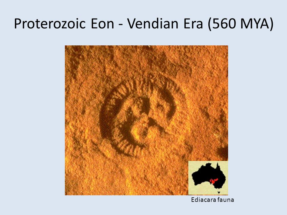 Proterozoic Eon - Vendian Era (560 MYA)