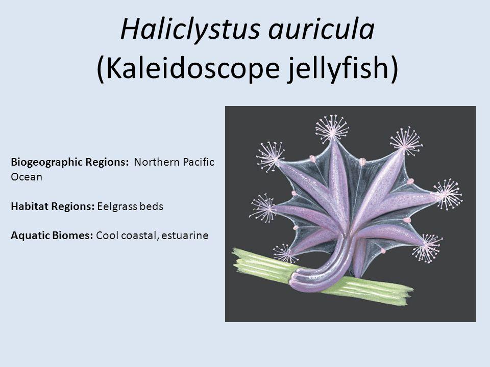 (Kaleidoscope jellyfish)