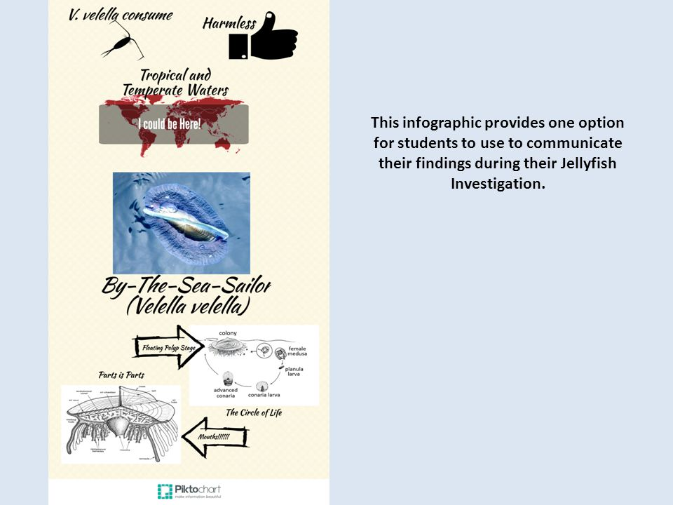 This infographic provides one option for students to use to communicate their findings during their Jellyfish Investigation.