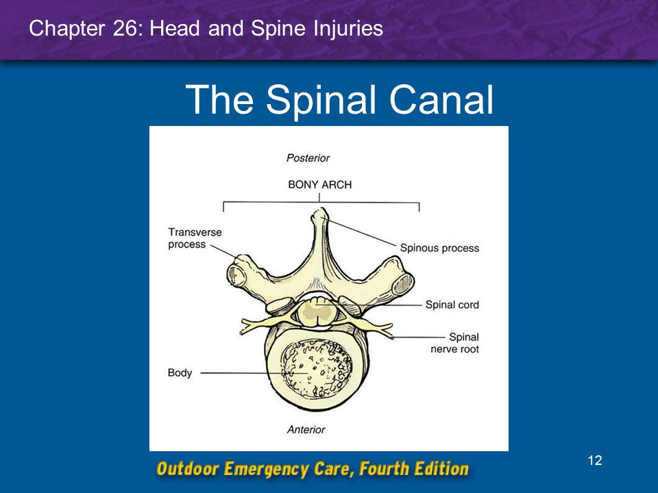 The Spinal Canal