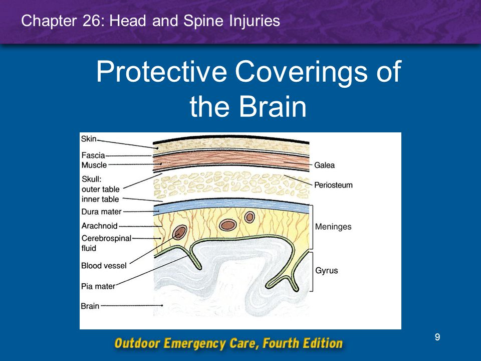 Protective Coverings of the Brain