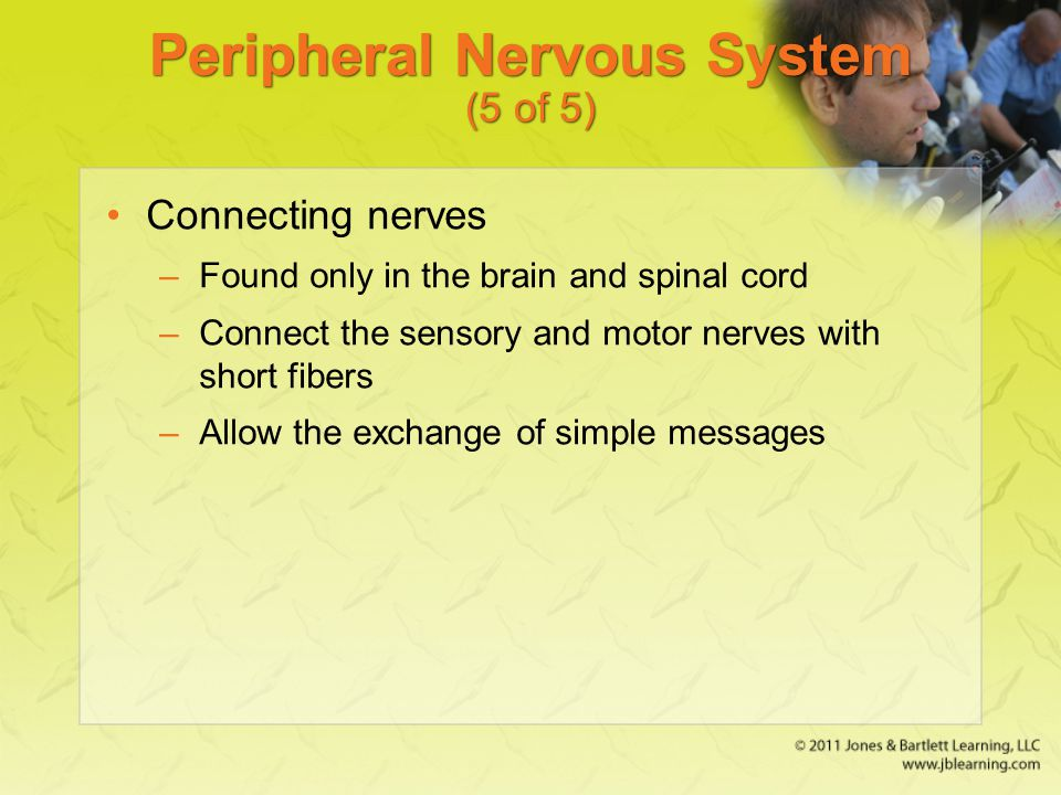 Peripheral Nervous System (5 of 5)