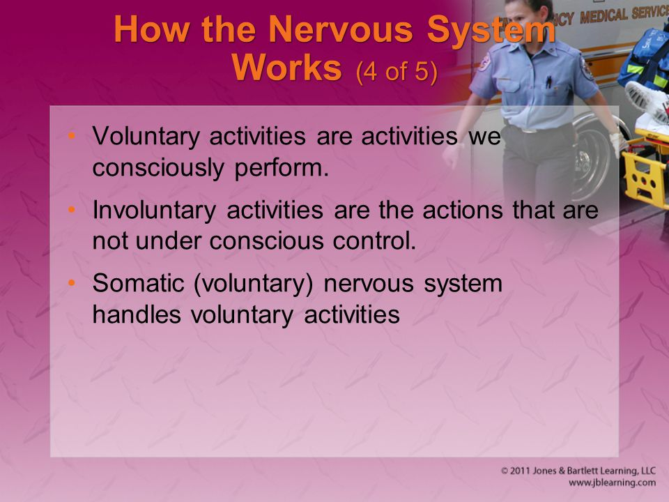How the Nervous System Works (4 of 5)