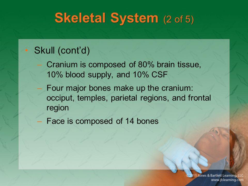 Skeletal System (2 of 5) Skull (cont'd)