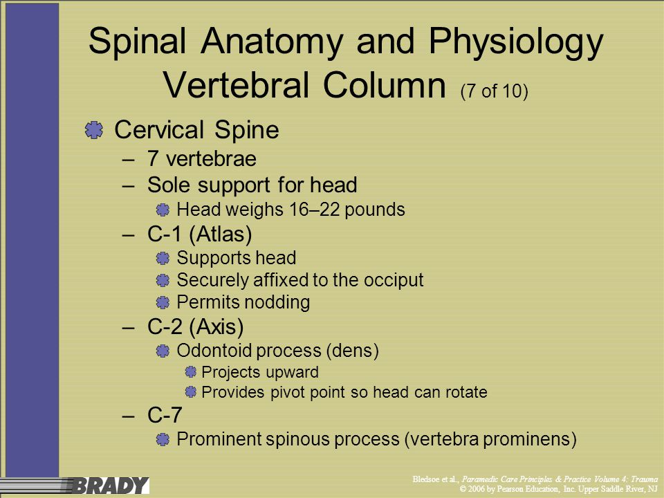 Spinal Anatomy and Physiology Vertebral Column (7 of 10)