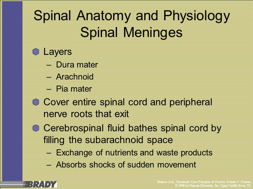Spinal Anatomy and Physiology Spinal Meninges