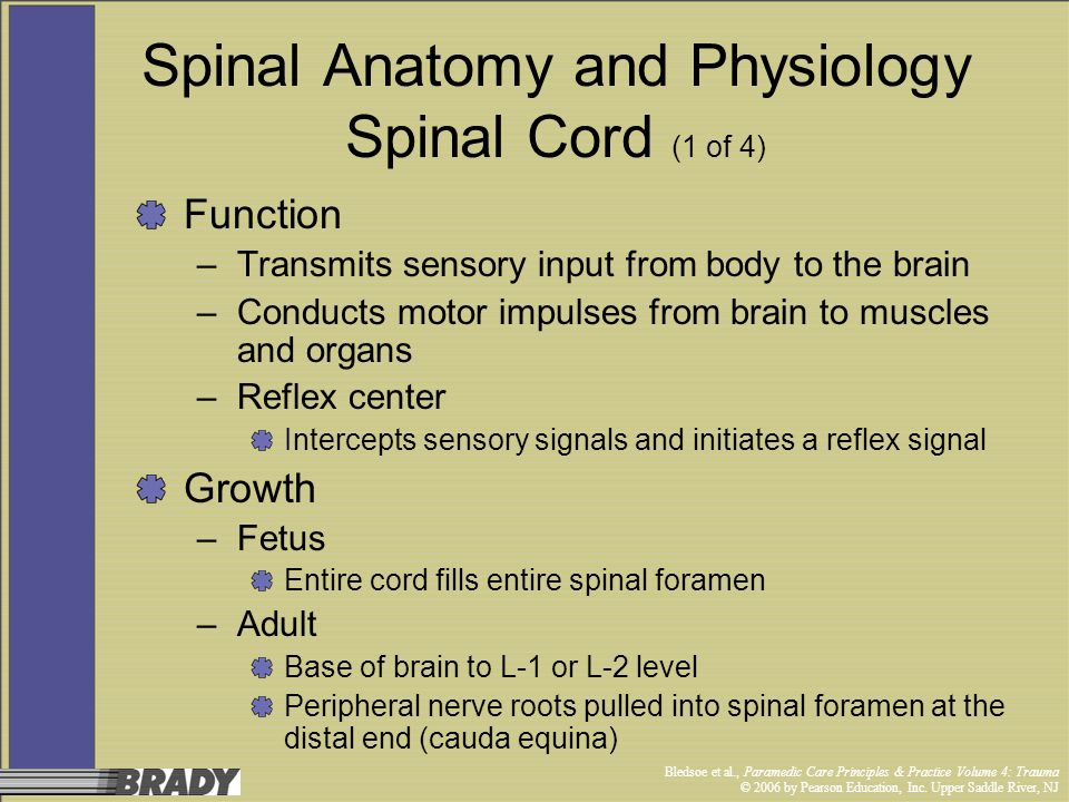 Spinal Anatomy and Physiology Spinal Cord (1 of 4)