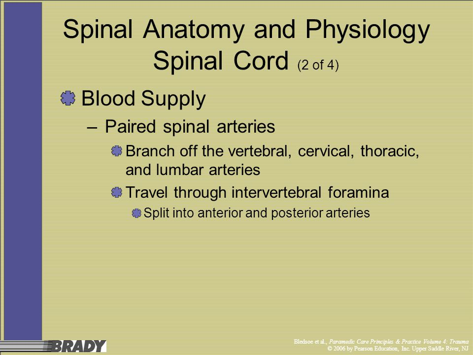 Spinal Anatomy and Physiology Spinal Cord (2 of 4)