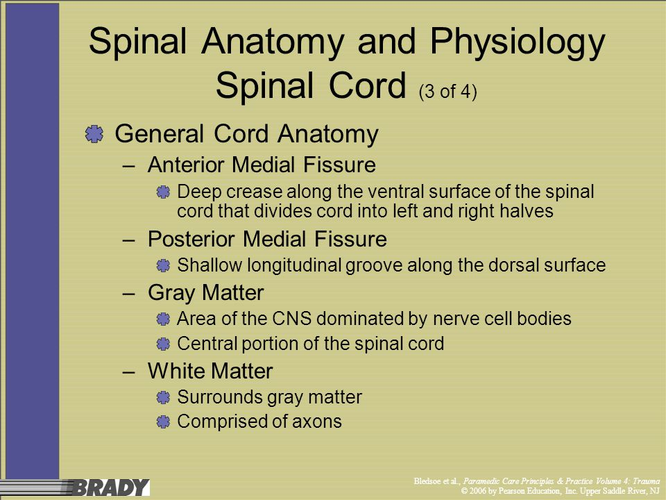 Spinal Anatomy and Physiology Spinal Cord (3 of 4)