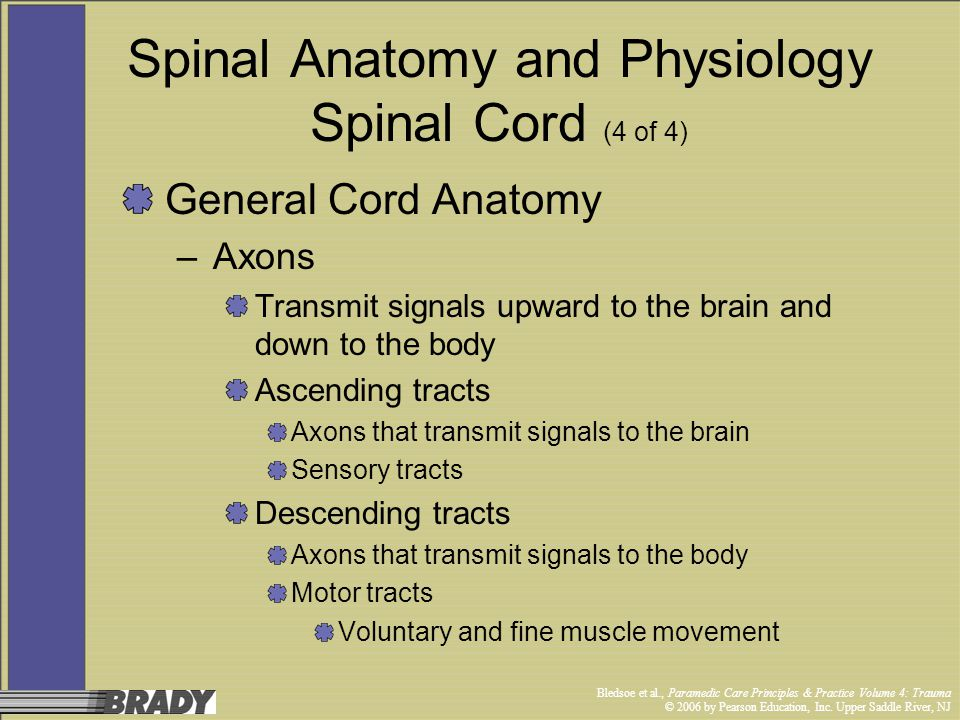 Spinal Anatomy and Physiology Spinal Cord (4 of 4)