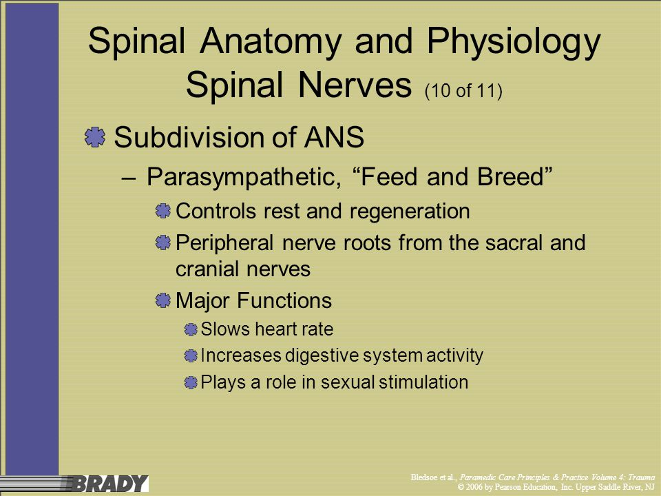 Spinal Anatomy and Physiology Spinal Nerves (10 of 11)
