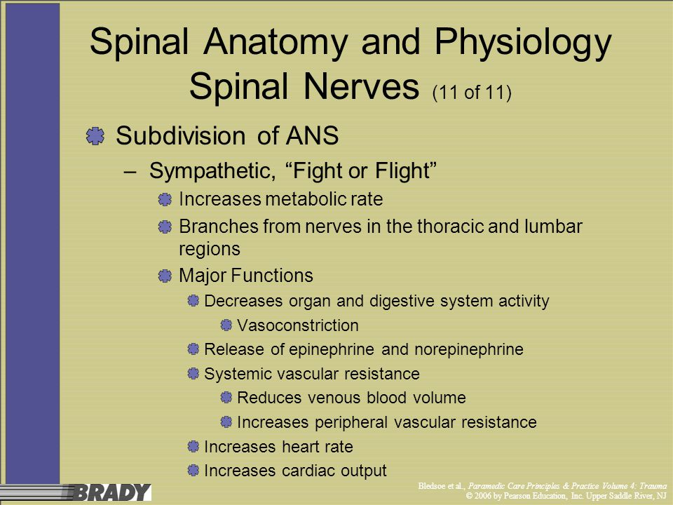 Spinal Anatomy and Physiology Spinal Nerves (11 of 11)