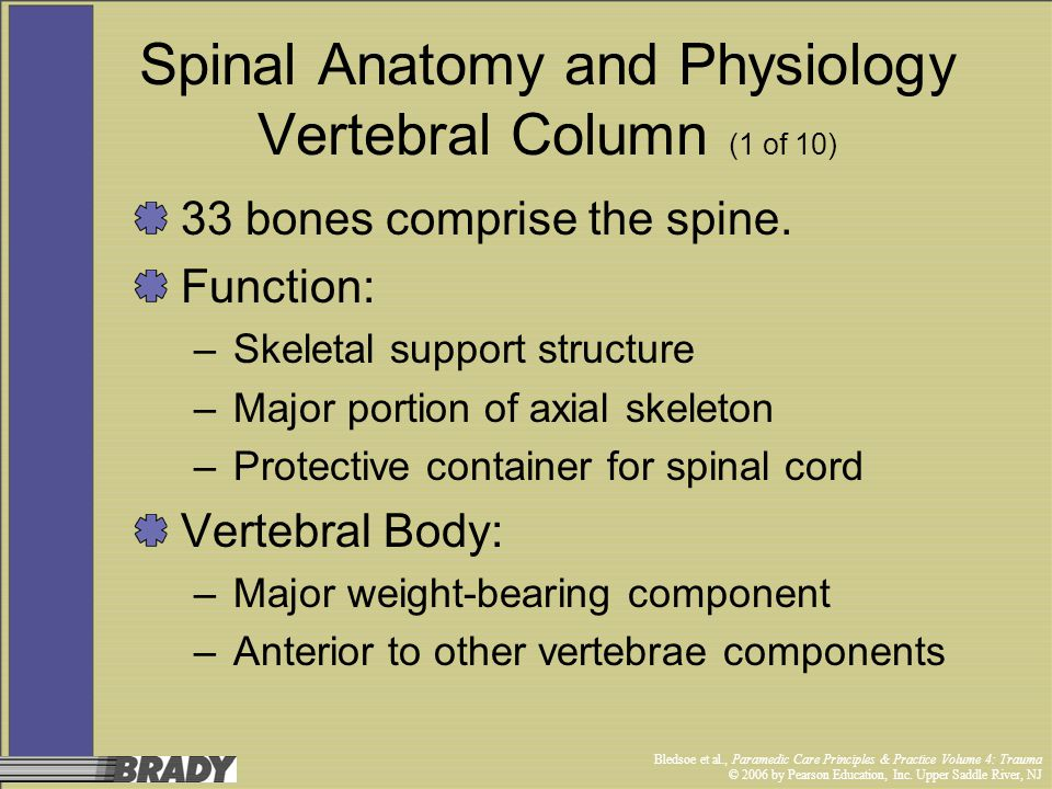 Spinal Anatomy and Physiology Vertebral Column (1 of 10)